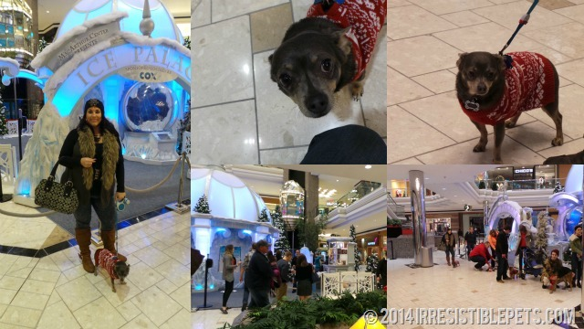 MacArthur Center Pet Photos Line