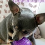 Chuy and the Purple Ball from PetBox