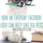 How an Everyday Facebook User Can Help Shelter Pets