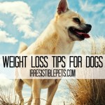 Weight Loss Tips and Resources for Dogs