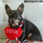 3-Ways-to-Say-I-Love-You-for-_DogDentalHealth-by-IrresistiblePets.com_.jpg