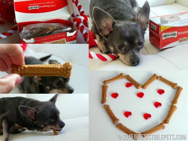 Milk-Bone Brushing Chews Chuy Chihuahua