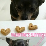 Valentine's Day Surprise Giveaway from PetBox!
