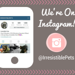 Irresistible Pets Is on Instagram!