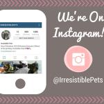 Irresistible Pets Is on Instagram!