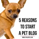 Five Reasons To Start a Pet Blog