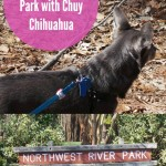 Northwest River Park with Chuy Chihuahua
