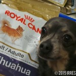 Five Nutrition Tips for Chihuahuas #RoyalCanin
