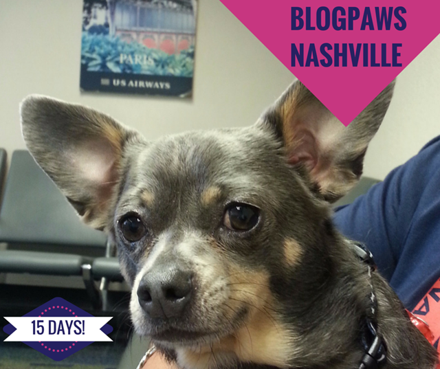 BlogPaws Countdown -  15 Days