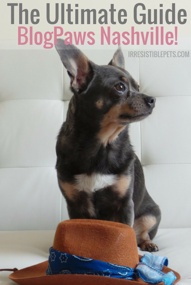 The Ultimate Guide to BlogPaws Nashville by IrresistiblePets.com