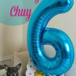 Happy 6th Birthday Chuy!