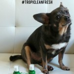 How to Get Irresistible Breath with #TropiCleanFresh