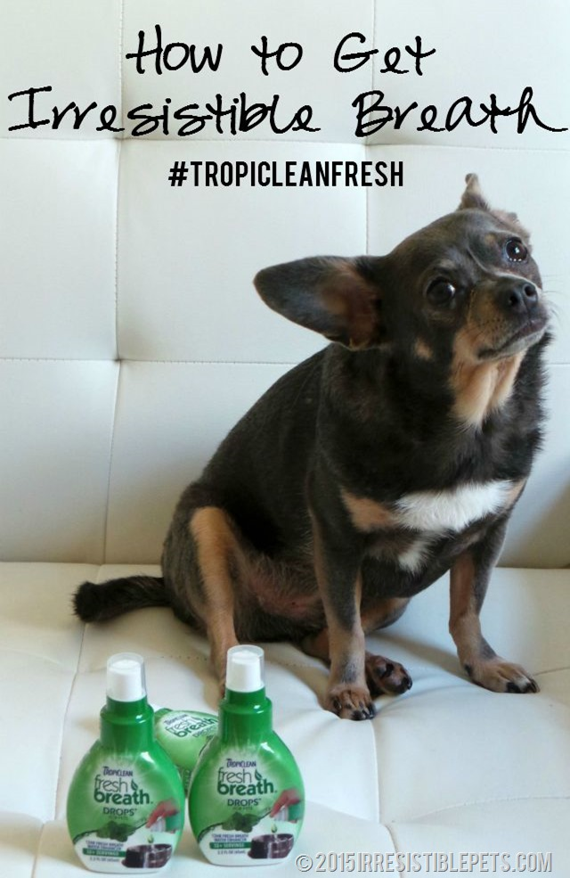 How to Get Irresistible Breath with #TropiCleanFresh IrresistiblePets.com