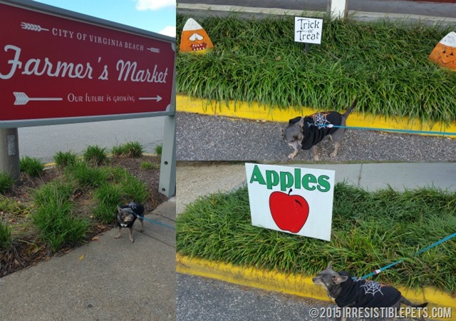 Virginia Beach Farmers Market Dog Friendly
