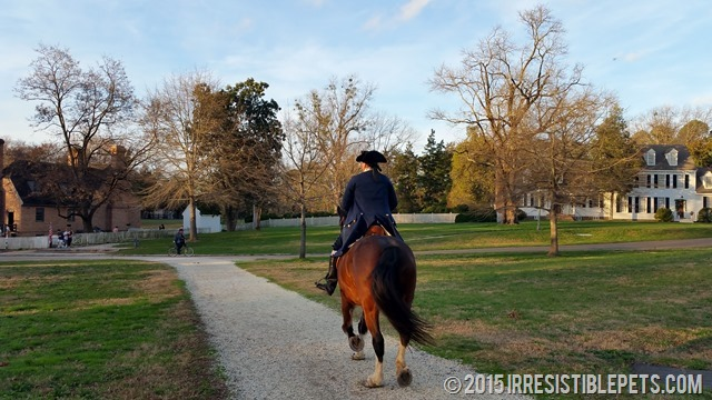 Chuy Chihuahua Colonial Williamsburg (27)