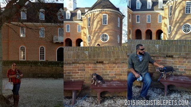 Chuy Chihuahua Colonial Williamsburg