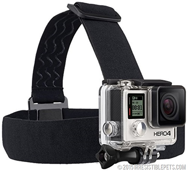 GoPro Head Mount for Dog Harness