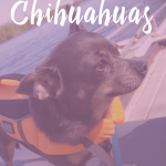 Must Have Gear for Kayaking with a Chihuahua