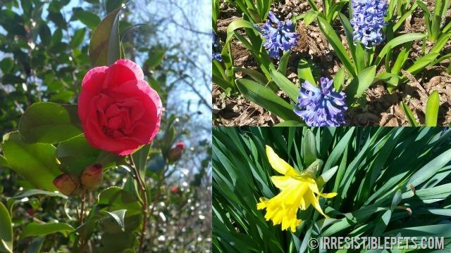 Chesapeake Arboretum Flowers