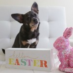 Chuy Chihuahua Celebrates Easter