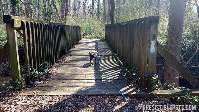 Chuy Chihuahua Chesapeake Arboretum (17)