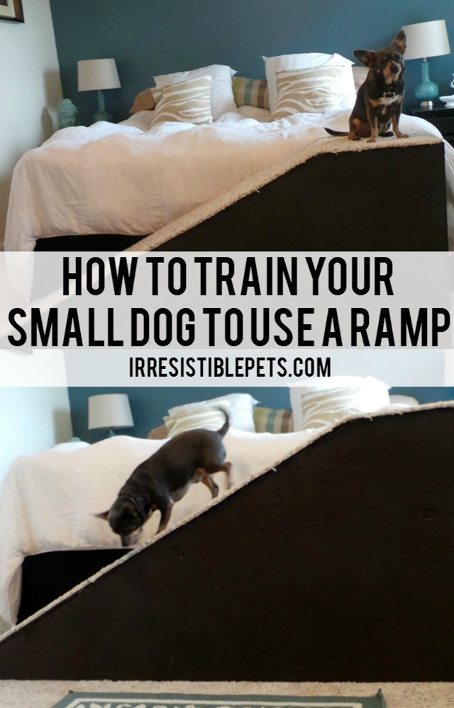 How To Train Your Small Dog to Use a Ramp by IrresistiblePets.com