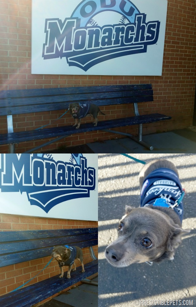 ODU Bark in the Park