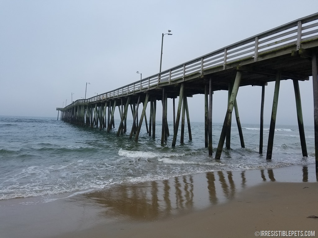 foggy day at the virginia beach fishing pier