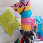 Celebrating Cinco de Mayo with Chuy Chihuahua