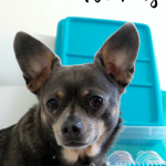 DIY Disaster Preparedness Kit for Pets #PetPrepared