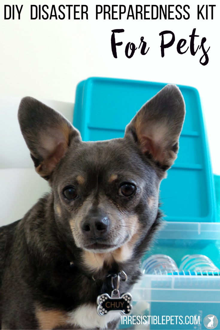 DIY Disaster Preparedness Kit For Pets by IrresistiblePets.com