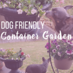 Dog Friendly Container Garden