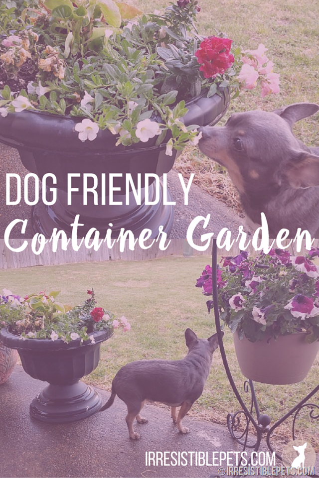 Dog Friendly Container Garden by IrresistiblePets.com