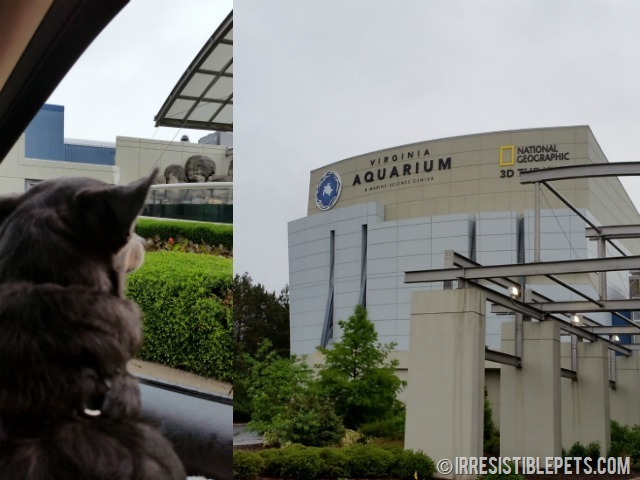 Virginia Aquarium with Chuy Chihuahua