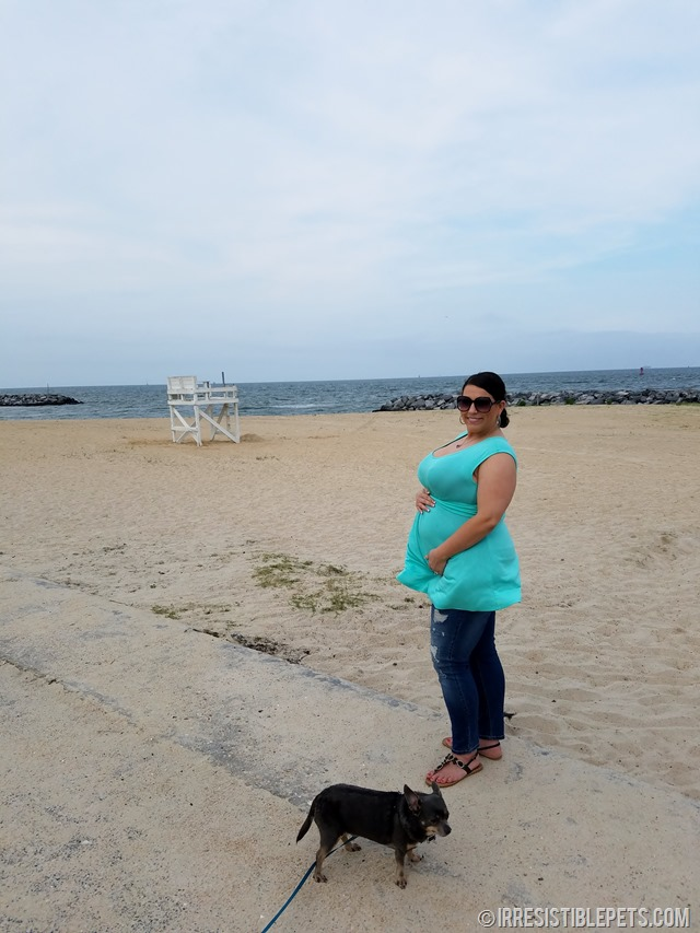 Chuy Chihuahua Walk at Ft Monroe Hampton VA (35)