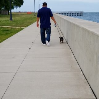 Chuy Chihuahua Walk at Ft Monroe Hampton VA (6)