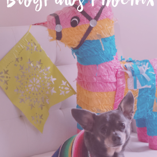 The Ultimate Guide to BlogPaws Phoenix by IrresistiblePets.com