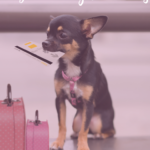The Ultimate Guide to Dog Friendly Vacations by IrresistiblePets.com