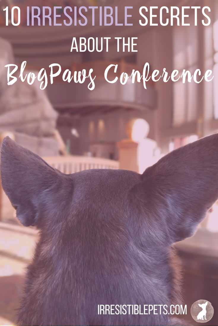 10 Irresistible Secrets from the BlogPaws Conference by IrresistiblePets.com