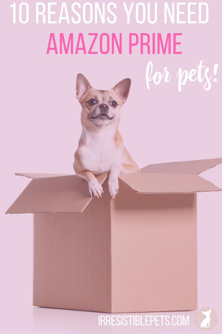 10 Reasons Why Every Pet Parent Needs Amazon Prime by IrresistiblePets.com