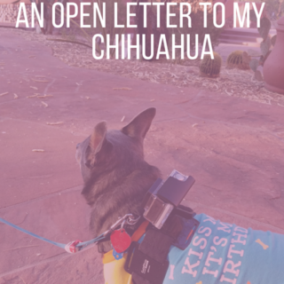 Happy-7th-Birthday-Chuy-An-Open-Letter-to-My-Chihuahua-by-IrresistiblePets.com_.png