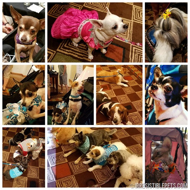 Irresistible Pets at BlogPaws