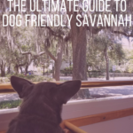 The Ultimate Guide to Dog Friendly Savannah