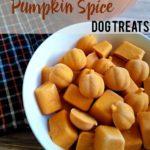DIY Frozen Pumpkin Spice Dog Treats