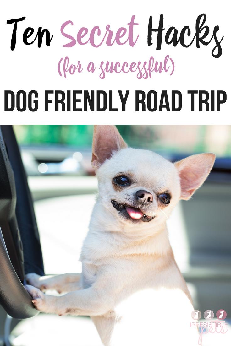 Dog Friendly Road Trips Texas