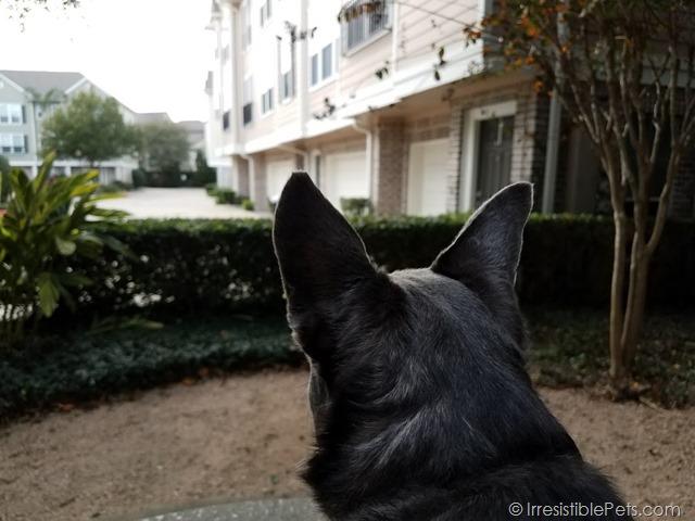 Chuy Chihuahua Airbnb