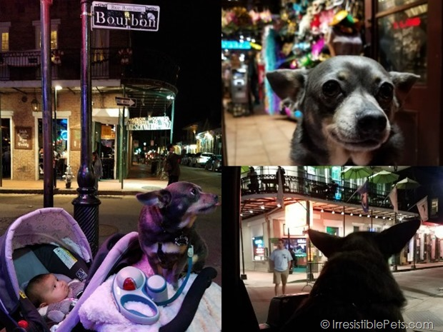 Dog Friendly Bourbon Street
