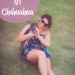 National Love Your Pet Day: 10 Reasons Why I Love Chuy