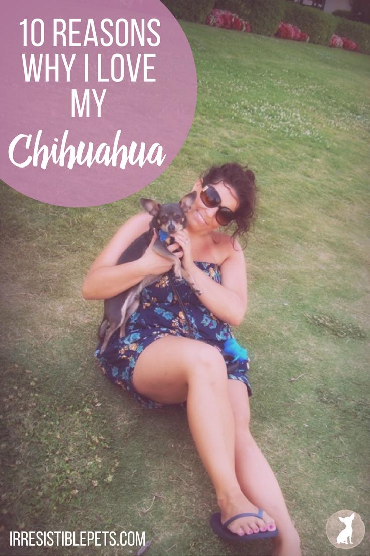 10 Reasons Why I Love My Chihuahua. Read More at IrresistiblePets.com