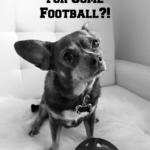 Irresistible Links {Super Bowl & Puppy Bowl Weekend!}